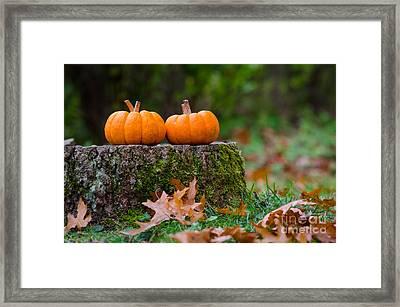 Fall Pumpkins Framed Print by Mike Ste Marie
