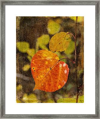 Fall Quaking Aspen Framed Print