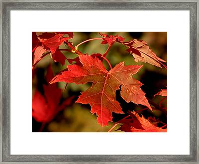Fall Red Beauty Framed Print