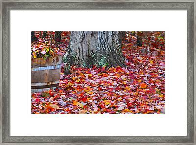 Fall Red Maple Framed Print