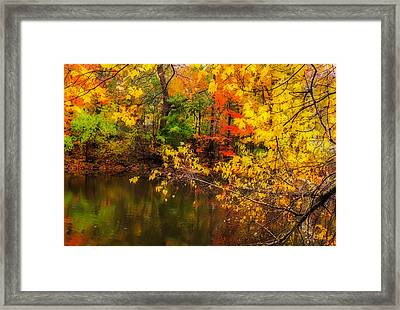 Fall Reflection Framed Print by Robert Mitchell