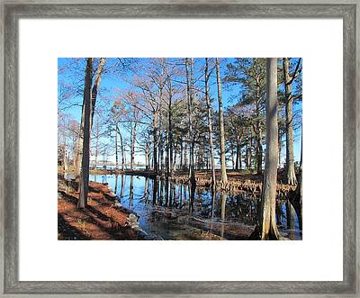 Fall Reflections And Shadows  Framed Print by Valia Bradshaw