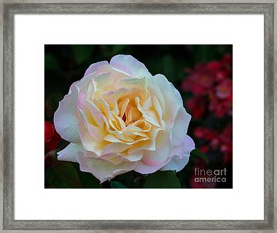 Fall Rose Bloom Framed Print