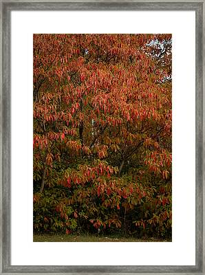Framed Print featuring the photograph Fall Sassafras Trees by Wayne Meyer