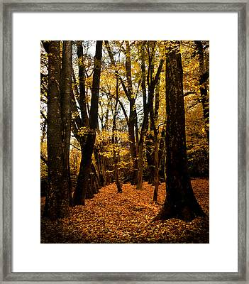 Fall Scene In Bidwell Park Framed Print