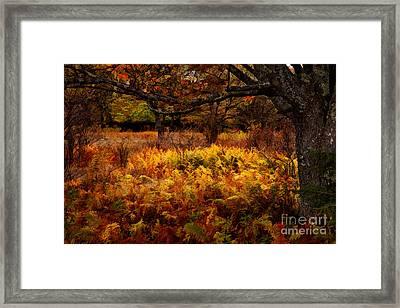 Fall Shadows - Dolly Sods West Virginia Framed Print by Dan Carmichael