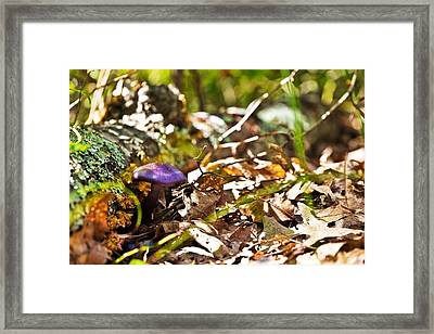 Fall Shroom Framed Print by Jonathon Shipman