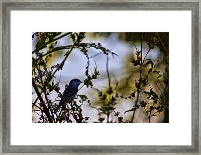 Fall Silhouette Framed Print