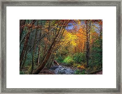 Fall Solitude Framed Print by Mary Almond