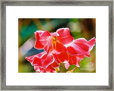 Fall Sparkle Gladiola Framed Print by Cynthia Syracuse
