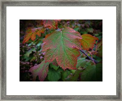 Fall Sparkle Framed Print