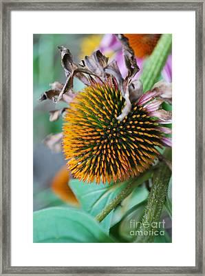 Fall Spikes Framed Print