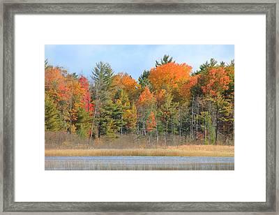Fall Splender Framed Print by Rhonda Humphreys