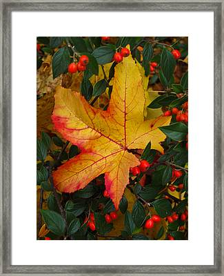Fall Splendor Framed Print by Cheryl Perin