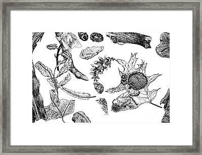 Fall Still Life Framed Print