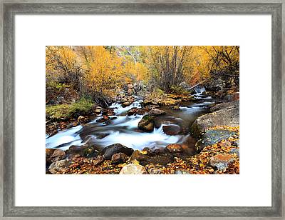 Fall Stream Framed Print