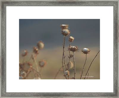 Framed Print featuring the photograph Fall Thistles At Dusk by Debby Pueschel