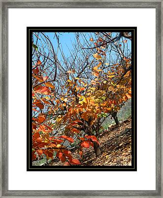Fall Time Framed Print by Arik Baltinester