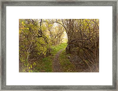 Fall Trail Framed Print by Frank Winters