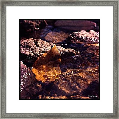 Framed Print featuring the photograph Fall by Travis Burgess