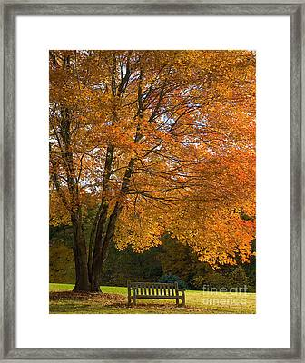 Fall Tree And Bench Framed Print