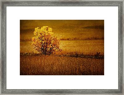 Fall Tree And Field #2 Framed Print by Nikolyn McDonald