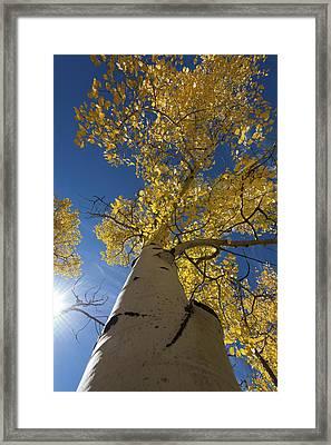 Fall Tree Framed Print by David Yack