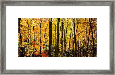 Fall Tree Panorama Framed Print