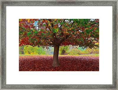 Fall Tree View Framed Print