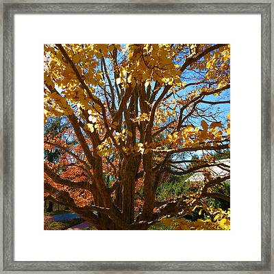 Fall Tree Framed Print by Vijay Sharon Govender