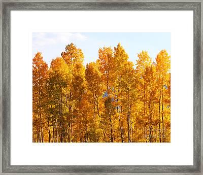 Fall Trees 8x10 Crop Framed Print