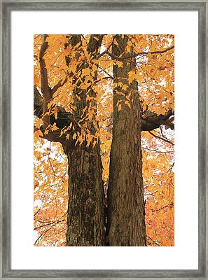 Framed Print featuring the photograph Fall Trees by Amazing Jules
