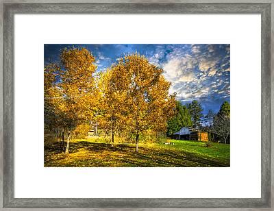 Fall Trees At The Farm Framed Print