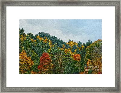 Fall Trees Framed Print by Nur Roy