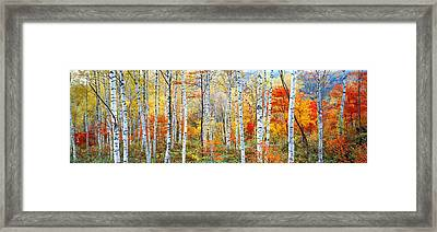 Fall Trees, Shinhodaka, Gifu, Japan Framed Print by Panoramic Images