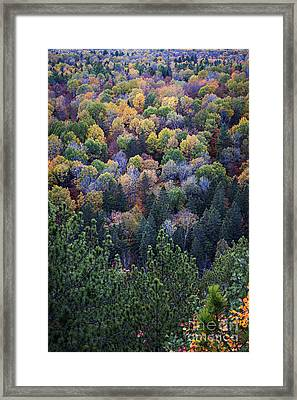Fall Treetops At Lookout Framed Print by Elena Elisseeva