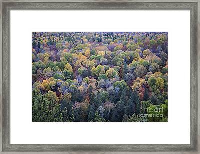 Fall Treetops Framed Print by Elena Elisseeva