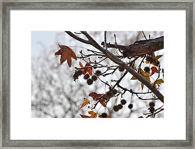 Fall Variations  3684  Framed Print by Paul Lyndon Phillips