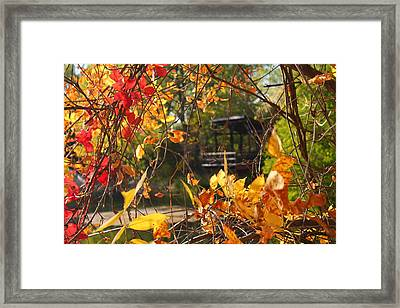 Framed Print featuring the photograph Fall View by Alicia Knust