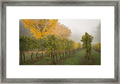 Fall Vineyard Colors Framed Print by Jean Noren