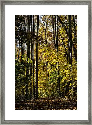 Fall Walk In The Woods Framed Print