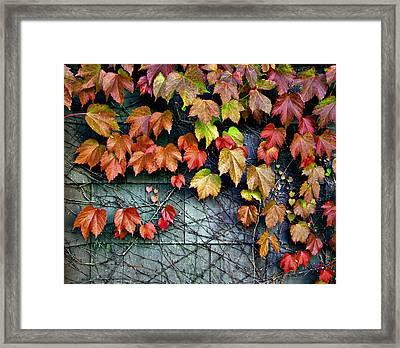 Fall Wall Framed Print by Kjirsten Collier