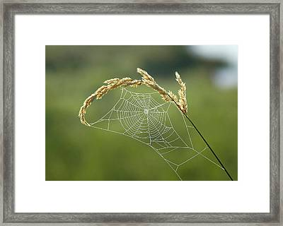 Fall Web Framed Print by Annie Pflueger