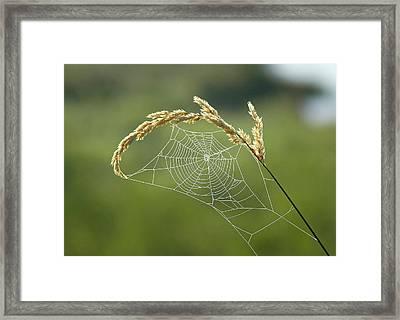 Fall Web Framed Print by Annie Pflueger