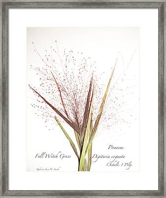 Fall Witch Grass Framed Print