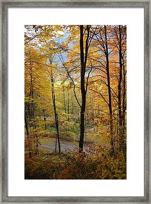 Fall Woods Framed Print by Marie Sullivan