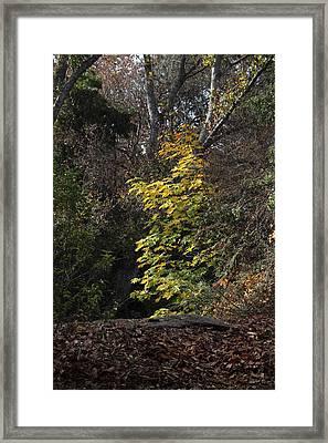 Fall2 Framed Print