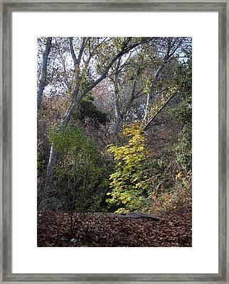 Fall2014 Framed Print
