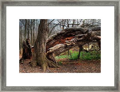 Framed Print featuring the photograph Fallen 1 by Jim Vance