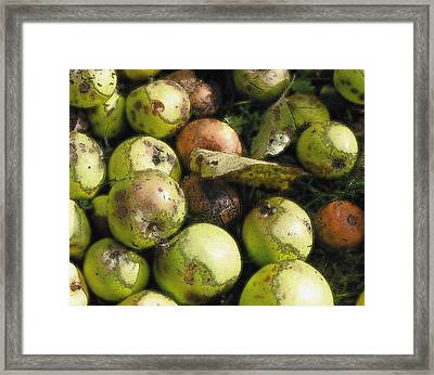 Framed Print featuring the digital art Fallen Aplles by Ron Harpham